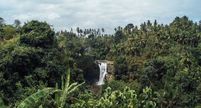 Ecco un altro grande successo dell'uomo: ormai le foreste tropicali emettono più carbonio di quanto ne assorbono!