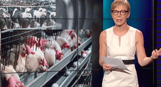 Milena Gabanelli – L'inchiesta shock di Report sui polli Amadori ed il terrificante video che proprio non volevano venisse trasmesso