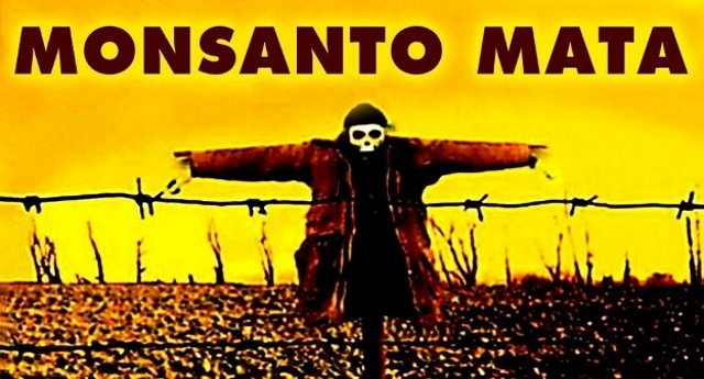 OGM – 20 anni di corruzione e frodi scientifiche. Dal cotone alla senape, gli agricoltori e la biodiversità vengono sacrificati, con qualumque mezzo, in nome del profitto della Monsanto.