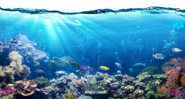 """Contaminanti marini, la Commissione europea scopre (solo adesso) il """"pericolo glifosato"""""""