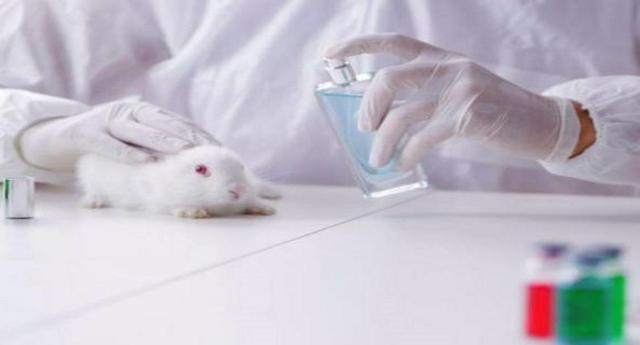 Test cosmetici vietati sugli animali – Ora l'obiettivo è il divieto mondiale