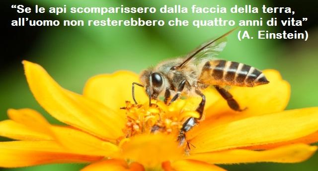 Ora anche l'Efsa conferma: i pesticidi neonicotinoidi sono i killer delle api