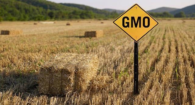 I Cinquestelle (e solo loro) lanciano l'allarme: in arrivo 22 nuovi OGM, nonostante il NO del Parlamento Europeo. La procedura di autorizzazione è da cambiare, ma sembra che a nessuno importi!