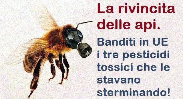 La rivincita delle api. Banditi in UE i tre pesticidi tossici che le stavano sterminando!