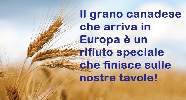 Il grano canadese che arriva in Europa? Nient'altro che un rifiuto speciale che finisce sulle nostre tavole!