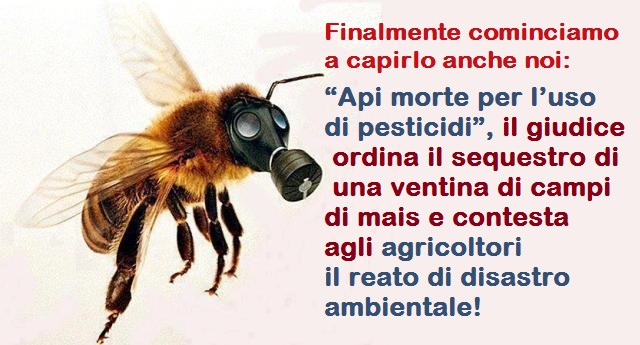 """Finalmente cominciamo a capirlo anche noi: """"Api morte per l'uso di pesticidi"""", il giudice ordina il sequestro di una ventina di campi di mais e contesta agli agricoltori il reato di disastro ambientale!"""