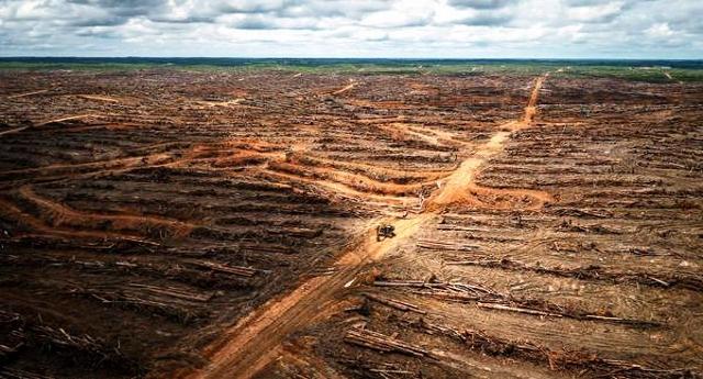 Nuova deforestazione massiccia in Indonesia – Come abbassiamo la guardia, in questo caso sull'olio di palma, le Multinazionali riprendono a distruggere il Nostro Mondo nel sacro nome del loro dio denaro!
