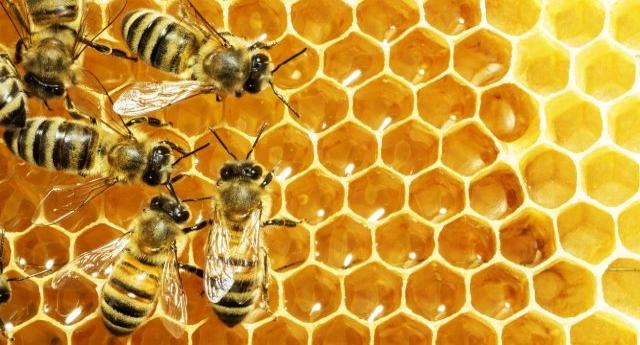 20 maggio – è la Giornata mondiale delle api