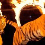 animali nel circo